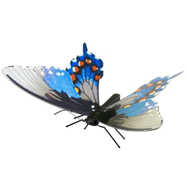 Schmetterling Pipevine Swallowtail