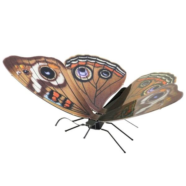 Schmetterling Buckeye
